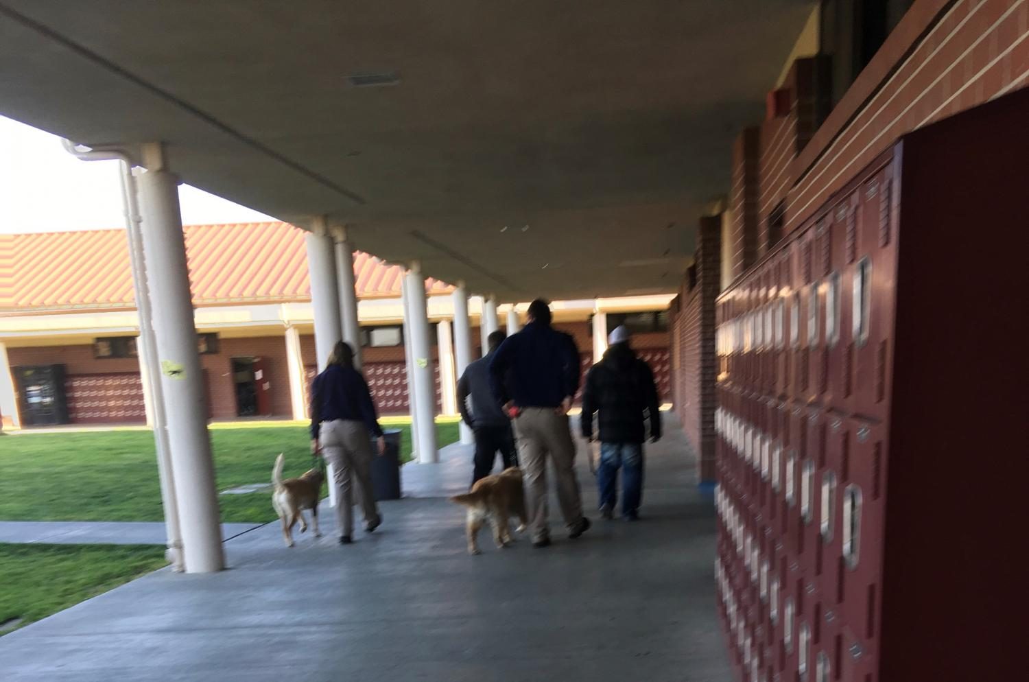 Drug-sniffing dogs make their way to random classrooms as part of a MUSD program.